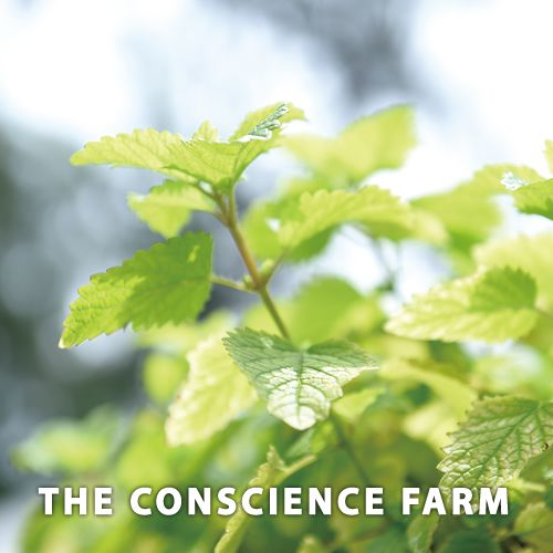 The Conscience Farm